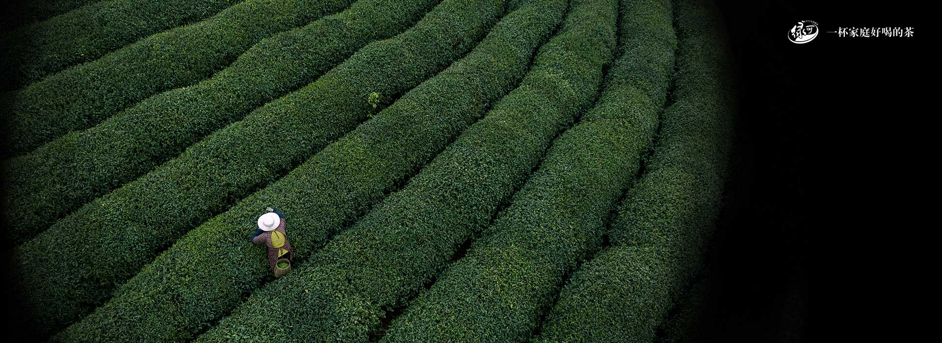 湖北绿可生态茶叶有限公司