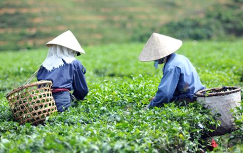 湖北省青翠源茶业有限公司